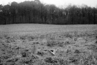 CeluiQuiDitLOmbre01©MagaliLambert