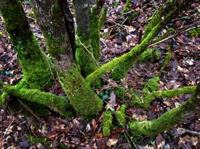 Forêt-SujetAnimal2015