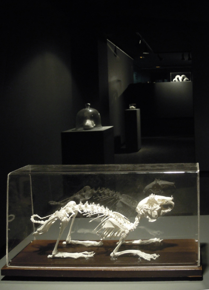 Worlds of Bones, installation Ateneo de Madrid, septembre 2013©MagaliLambert