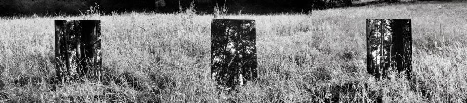 Le Treizième Arbre © Magali Lambert 2015