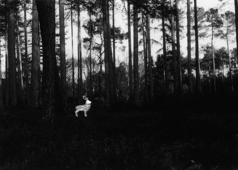 Nouvelle série en cours, autour de l'animal©MagaliLambert