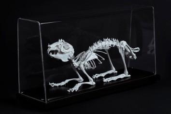 Worlds of Bones, Rabbit©MagaliLambert-ADAGP