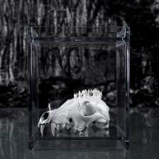 Worlds of Bones, Fox©MagaliLambert-ADAGP