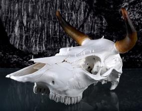 Worlds of Bones, Bull©MagaliLambert-ADAGP