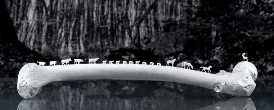 Worlds of Bones, Femur©MagaliLambert-ADAGP