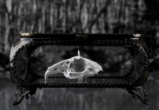 Worlds of Bones, Rabbit