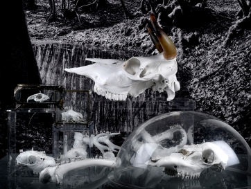 Nouvelles sculptures pour la série Worlds of Bones