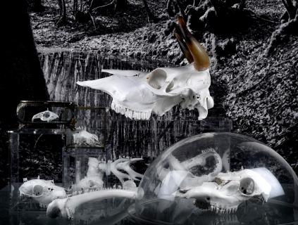 Nouvelles sculptures pour la série Worlds of Bones©MagaliLambert-ADAGP