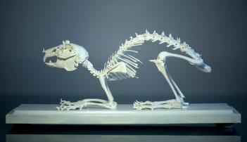 Worlds Of Bones © Magali Lambert - ADAGP